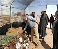 «الزملوط» يتفقد مشروعين للاستثمار الزراعي شمال مدينة الخارجة