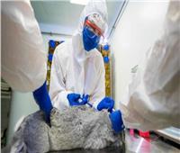 تسجيل أول لقاح كورونا في العالم للحيوانات|فيديو