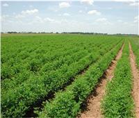 «الريف المصري»: لدينا أكثر من 13 ألف منتفع بأراضي الـ1.5 مليون فدان