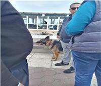 مصادرة 3 كلاب في الإسكندرية لمخالفة ضوابط السير في الأماكن العامة   صور