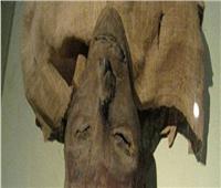 بعد الحدث الأسطوري| ما الذي سيحدث للمومياوات بعد وصول متحف الحضارة