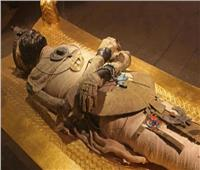 السياحة: الشعب المصري في حقبة العصر الفرعوني كان متحضر جدا.. فيديو