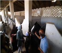 الغردقة تحتفل باليوم العالمى للتوحد.. بمعالجة الأطفال بالخيول