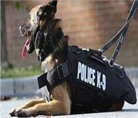 «كلب بوليسي» يتسبب في استقالة ضابط شرطة