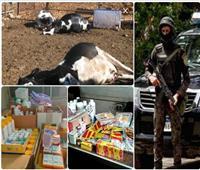 حملات أمنية مكبرة لمواجهة «مافيا» الدواء البيطري