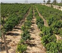 «تغير المناخ بالزراعة» يرصد تأثير الموجة الحارة على المحاصيل