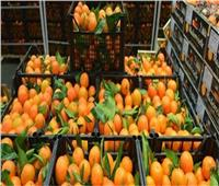 الزراعة تعلن دخول أول شحنة برتقال مصري إلى الأسواق اليابانية