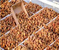 «الزراعة» تعلن 17 توصية لمهرجان التمور.. أبرزها إنشاء بورصة واستنساخ الفسائل