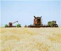 محافظ أسوان :  80 % زيادة في توريد القمح و تيسيرات كبيرة للمزارعين
