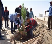 زراعة ١٢٠ شجرة نخيل مثمر بجامعة سوهاج هدية منتنمية وحماية البيئة