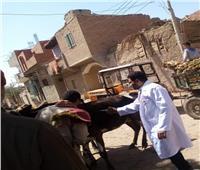 الزراعة: تحصين 644 ألف راس ماشية ضد الجلد العقدي وجدري الأغنام