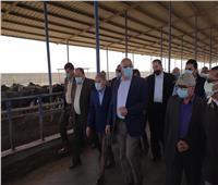 «القصير»: مزرعة الإنتاج الحيواني بغرب المنيا نموذجاً للمشروعات المتميزة