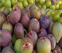 7 نصائح لحماية محصول «التين» خلال شهر أبريل