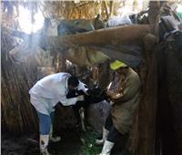 تحصين ما يقرب من 109 ألف رأس ماشية بالمنوفية