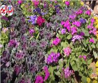 معرض الزهور أيقونة النباتات العطرية والزهور النادرة | فيديو