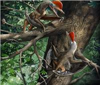 اكتشاف زواحف طائرة «فريدة» عاشت بالصين قبل 160 مليون سنة