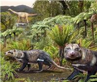 العثور على «وحش الأسنان الخمس»بعد 74 مليون سنة