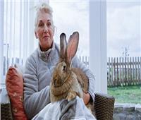 مكافأة مالية لمن يعيد «الأرنب المفقود»