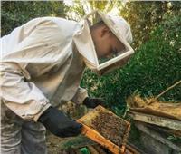 العسل المصري| البكتيريا ومبيدات «بير السلم» تضرب خلايا المناحل