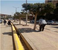 تقليم ودهان الأشجار في شوارع الحوامدية بالجيزة | صور