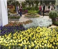 «الزراعة» تعلن توصيات مؤتمر النهوض بصناعة الزهور في مصر