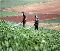 5 توصيات من «الزراعة» لحماية محاصيل الخضر من تأثيرات الموجة الحارة