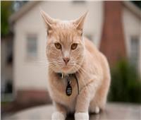 «بـ كيس معلق حول رقبته».. ضبط «قط» يهرب مخدرات إلى السجن
