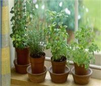 قبل الصيف | ٥ نباتات طاردة للناموس