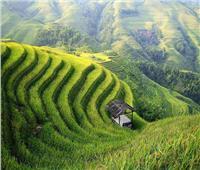 الصين تعزز «التنمية الخضراء» على طول مبادرة الحزام والطريق