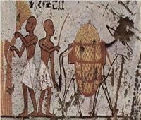 لرضا الآلهة.. الفراعنة كانوا يأكلون لحم الحمير