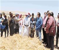 موسم حصاد القمح.. رمز السعادة لـ«أبناء سيناء»