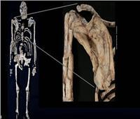 «دراسة»: أسلاف البشر عاشوا على الشجر مثل القردة | فيديو