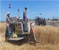محافظ بورسعيد يشهد موسم حصاد القمح بأحد الحقول الزراعية
