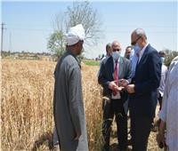 محافظ القليوبية يوجه بسرعة إنهاء إجراءات تسليم ثمن محصول القمح للموردين