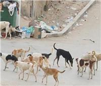 الكلاب الضالة تزعج مرضى مستشفى الفشن بـ «بنى سويف»