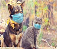 دراسة حديثة تؤكد انتقال فيروس «كورونا» من الإنسان إلى القطط