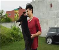 طالب بيطري يُربي أرانب عملاقة تستخدم في العلاج النفسي بالمكسيك