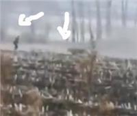 «نمر ضخم» يكسر زجاج سيارة و يهجم علي مزارع في الحقل.. فيديو