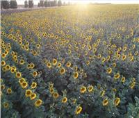 «معلومات المناخ»: موجة حارة لمدة 6 أيام.. وهذه نصائح للمزارعين