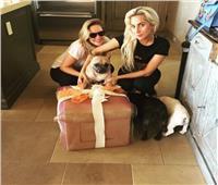 مكافأة 500 ألف دولار لمن يعثر على كلاب «ليدي جاجا»