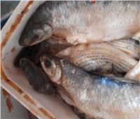 لجنة من بيطري الأقصر للتفتيش على محلات الأسماك المملحة