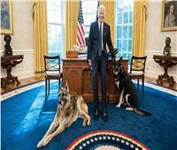 البيت الأبيض يستعد لاستقبال ضيف جديد