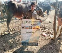 قافلة بيطرية توعوية في سوق الماشية بالمنوفية