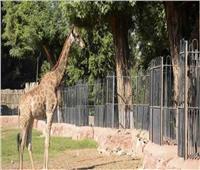 للعام الثاني.. حديقة الحيوان ترفع شعار «لم يحضر أحد» في شم النسيم 2021