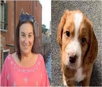 امرأة تجمع 140 ألف توقيع لتشديد عقوبة سرقة «الكلاب»