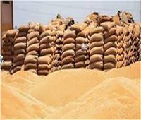 شون المنيا تتسلم 51902 طن قمح من المزارعين