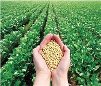 «الزراعة» تصدر التوصيات الفنية لمزارعي محصول فول الصويا لشهر مايو