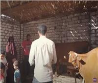 حياة كريمة يهدي «الحسيني» و«آيات» مشروع تسمين عجول