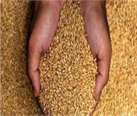 وزير التموين: نسب توريد القمح وصلت إلى 1.4 مليون طن قمح في الأسبوعين الماضيين