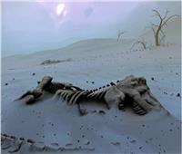 اكتشاف حفرية ديناصور عمرها 200 مليون عام جنوب غربي الصين